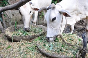 Livestock and Livestock Products